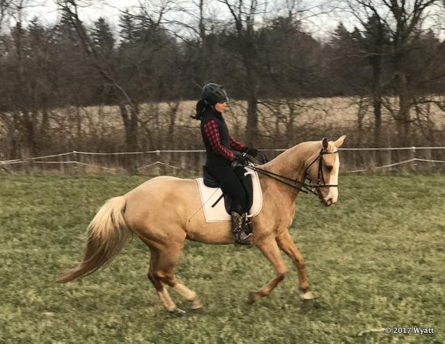 Riding 12-2-17 - 5