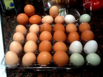 Eggs from our hens from 2015.